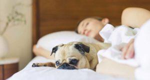 Ihr Haustier kann Ihnen helfen
